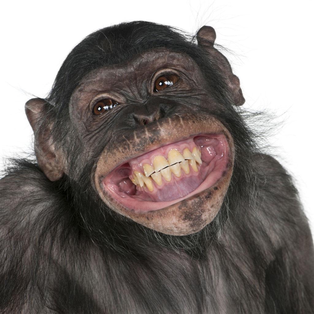Afbeeldingsresultaat voor lachen